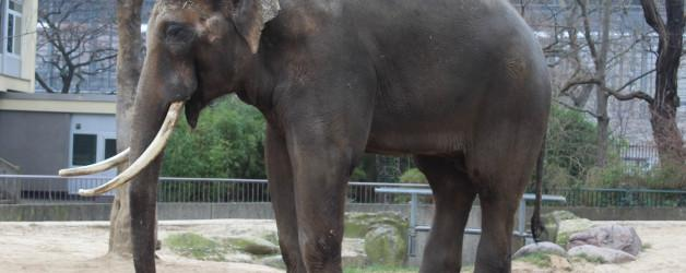 10.2.2018 Zoo Berliini, Brandenburg Tor ja Sony Center